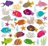 Färgglad fiskuppsättning Royaltyfri Foto