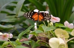 färgglad fjäril Arkivfoto