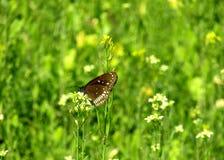 Färgglad fjäril på blomman som ser mycket trevlig arkivbild