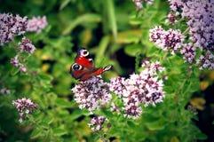 Färgglad fjäril på blommor Arkivbilder