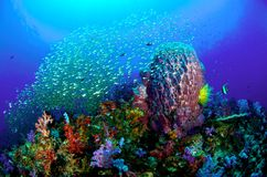 färgglad korallrev Arkivfoto