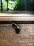 Färgglad larv med grova spikar Royaltyfria Foton