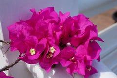 Färgglad natur Royaltyfria Bilder
