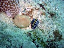 färgglad nudibranch Arkivbild