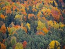 Färgglad skog i Polen Arkivbild