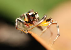 Färgglad spindel Arkivbild