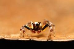 Färgglad spindel Royaltyfri Bild