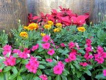 färgglad trädgård Royaltyfri Fotografi