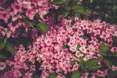 färgglad trädgård Arkivfoton