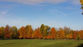 Färgglad trädlinje av träd i höst royaltyfri bild