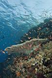färgglad tropisk korallreefscape Arkivbild