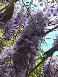 färgglada blommor arkivbilder