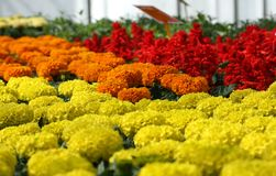 färgglada blommor Arkivfoto
