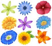 färgglada blommor vektor illustrationer