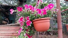 färgglada blommor royaltyfria bilder