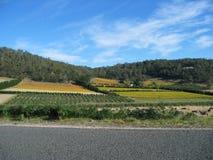 färgglada fält tasmania Fotografering för Bildbyråer