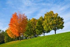 Färgglada höstTrees Royaltyfri Fotografi