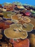 färgglada korallträdgårdar Royaltyfria Foton