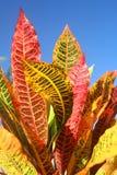 Färgglada leaves royaltyfri foto
