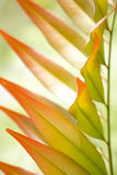 färgglada leaves royaltyfri fotografi