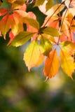 färgglada leaves för höst arkivfoton