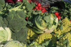 färgglada olika grönsaker Arkivbilder