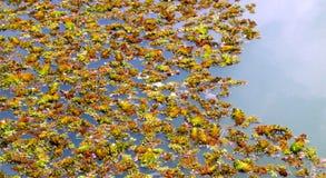 färgglada växter Royaltyfri Fotografi