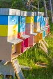 Färgglade bikupor i ett fält Slight blur i löpare för att visa rörelse Royaltyfri Bild
