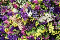 Färgglade blommor Arkivbilder
