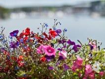 Färgglade blommor Fotografering för Bildbyråer