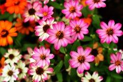 Färgglade blommor för närbild Royaltyfria Foton