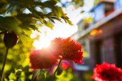 Färgglade blommor i solen Arkivbild