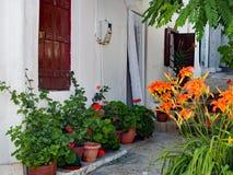 Färgglade blommor i utvändigt vitt grekiskt hus för krukor Royaltyfria Bilder