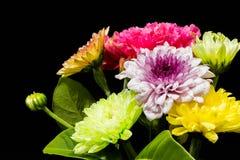 Färgglade blommor på svart bakgrund Royaltyfri Foto