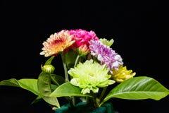 Färgglade blommor på svart bakgrund Arkivbild