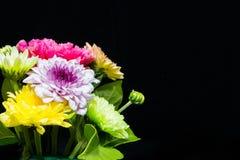 Färgglade blommor på svart bakgrund Royaltyfria Foton