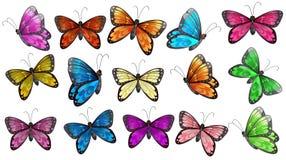 Färgglade fjärilar Arkivbild