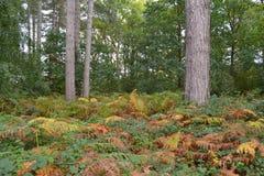 Färgglade höstormbunkar på skoggolv Arkivbild