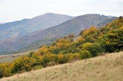 Färgglade höstskogträd Royaltyfria Foton