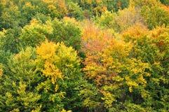 Färgglade höstskogträd Fotografering för Bildbyråer