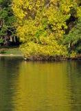 Färgglade höstträd med reflexion i vatten Arkivfoto