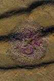 Färgglade Jelly Fish på sand Royaltyfria Bilder