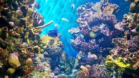 Färgglade koraller royaltyfria bilder