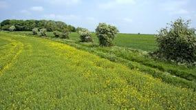 Färgglade lantliga lantgårdfält i vårengelskabygd Royaltyfria Bilder