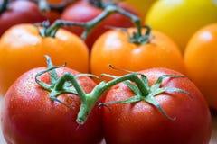 Färgglade nya tomater Royaltyfri Fotografi
