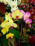 Färgglade orkidéblommor Arkivfoto