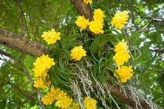 Färgglade orkidér är härliga fotografering för bildbyråer