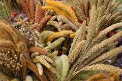 Färgglade sädesslagväxter Fotografering för Bildbyråer