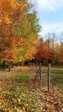Färgglade träd bredvid hästpaddock med det elektriska staketet royaltyfri bild