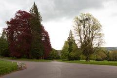 Färgglade träd i en parkera och en bänkplats Royaltyfri Bild